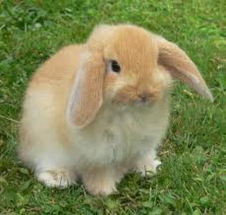 une patte de lapin 231 a porte bonheur mais pas pour les lapins questions et r 233 ponses