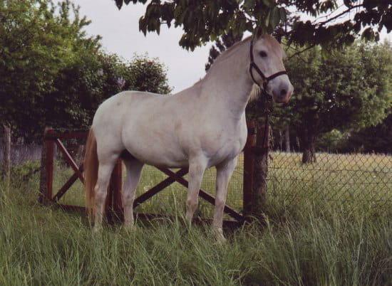 Bo terie chez le cheval vos t moignages r solu chevaux - Quand mettre du fumier de cheval dans le jardin ...