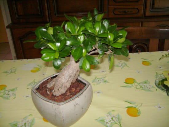 quelle est cette plante verte. Black Bedroom Furniture Sets. Home Design Ideas