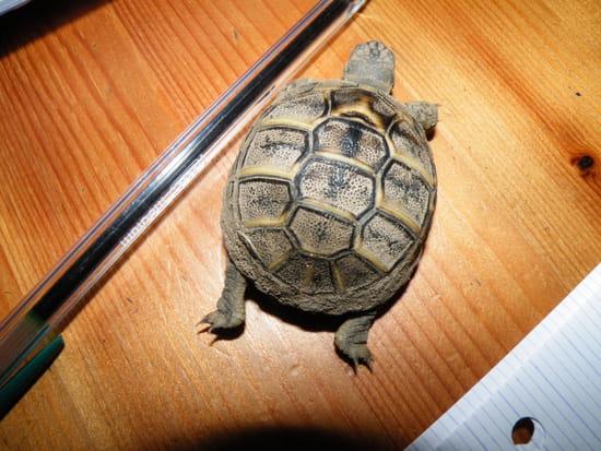vraie tortue de terre pas cher