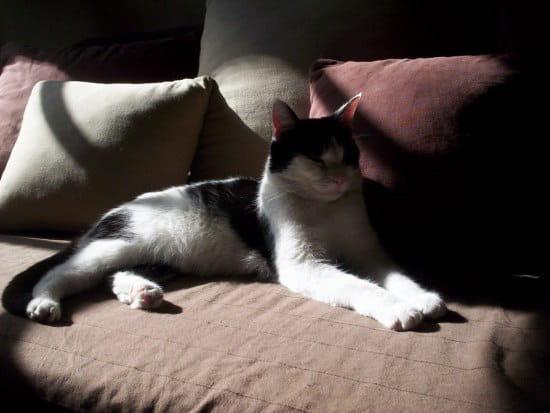Comment arreter que mon chat urine partout - Mon chat fait pipi dans mon lit ...