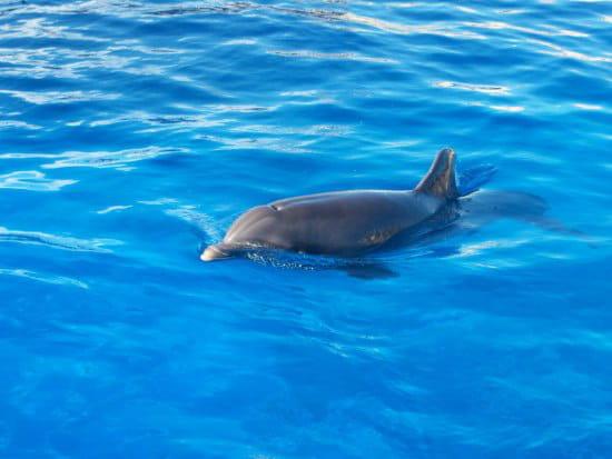 Duree rencontre dauphin marineland