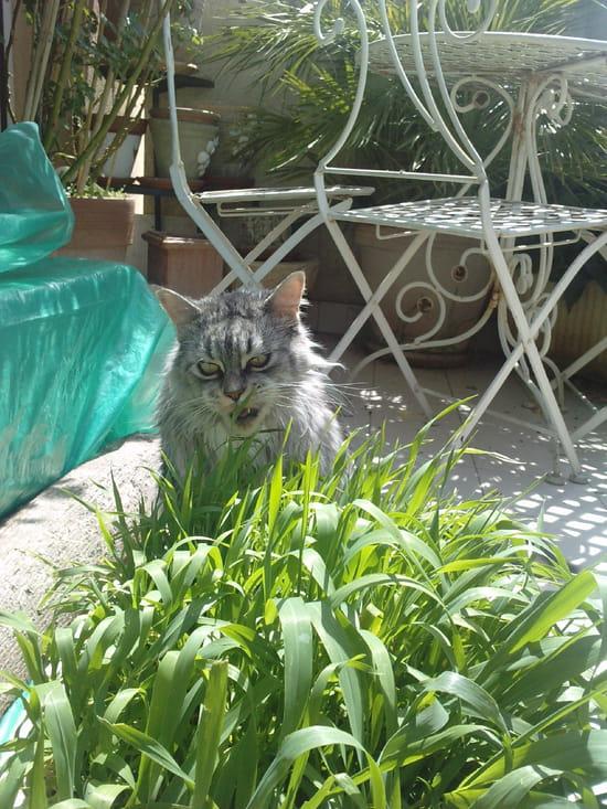 Comment faire repousser l 39 herbe chat - Herbe a chat entretien ...