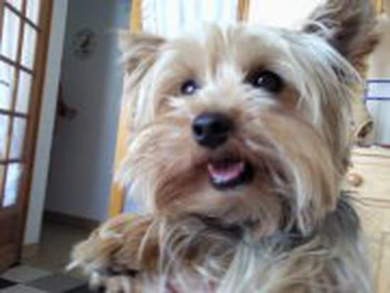 Bonjour, le mien mange principalement des croquettes royal canin mini  junior! et des fois je lui des legumes ou du fromage!!