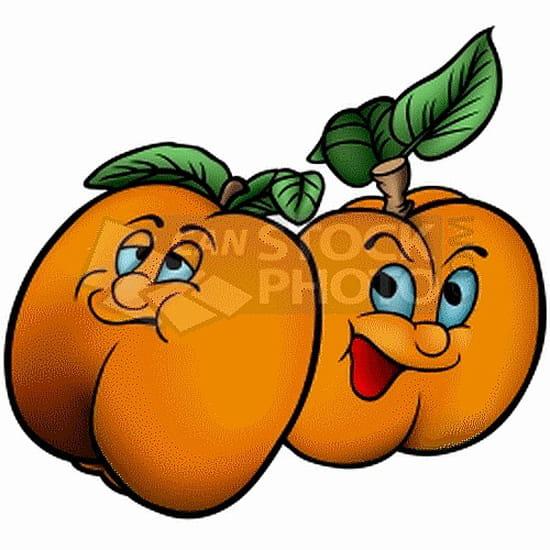 o et quand planter un abricotier potager fruits. Black Bedroom Furniture Sets. Home Design Ideas