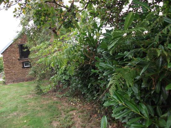 probl me de haie avec mon voisin avez vous des conseils r solu arbres et arbustes. Black Bedroom Furniture Sets. Home Design Ideas
