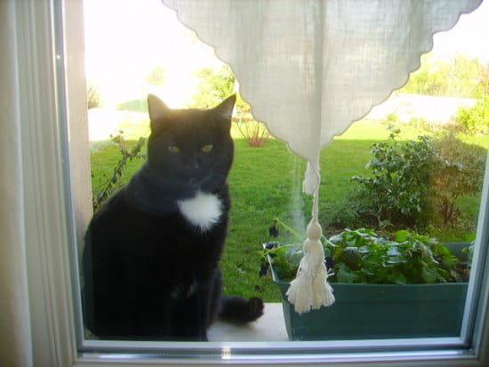 comment arreter les chaleurs d un chat