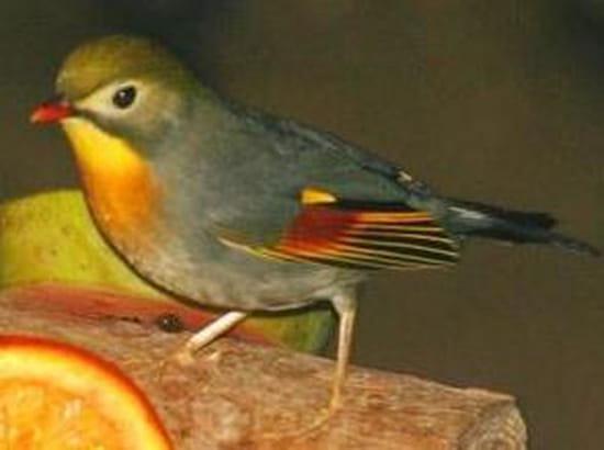Quels petits oiseaux chantent r solu for Les petits oiseaux