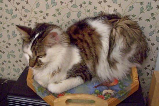Mon chat a comme des p llicules r solu - Comment eloigner les chats de mon jardin ...