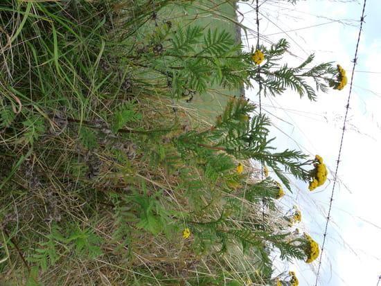 O trouver des plantes de chartreuse r solu for Ou acheter des plantes