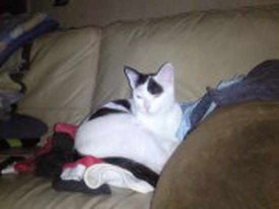 mon chaton de 3mois a des puces comment faire pour lui enlever car