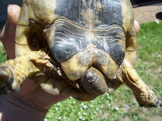 comment reconnaitre ma tortue