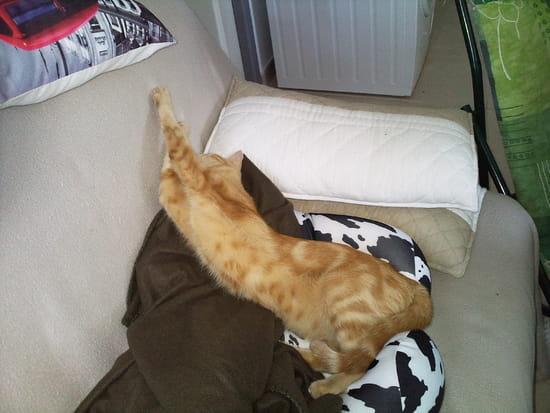 mon chat a peur du s che linge que faire r solu. Black Bedroom Furniture Sets. Home Design Ideas