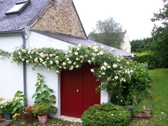 Comment planter un rosier grimpant contre un mur r solu - Comment tailler un rosier grimpant ...