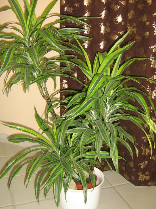 comment soigner ma plante. Black Bedroom Furniture Sets. Home Design Ideas