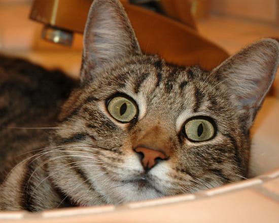 mon chat attend des b 233 b 233 s quand peut on les sentir r 233 solu