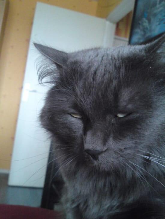 Comment faire pour que les chats male arr tent d 39 uriner - Comment fabriquer un lit pour chat ...