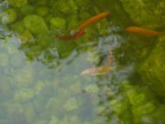 Pourquoi le bassin extérieur devient vert et que faire (bassin avec ...