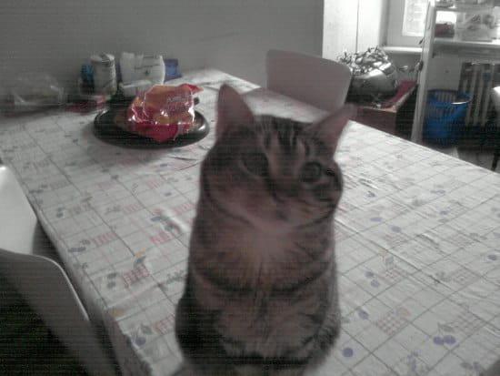 Mes chats ont saccag la tapisserie avec leurs griffes que mettre sur les murs r solu - Mes chats ont des puces ...
