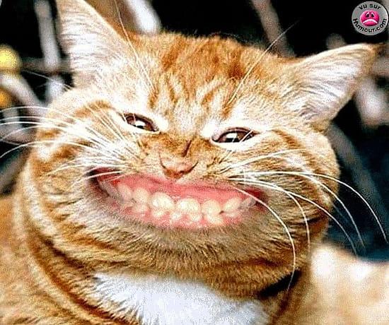 Comment enlever des traces de pattes de chat sur une table en ch ne verni id es d co - Trace de patte de chat ...