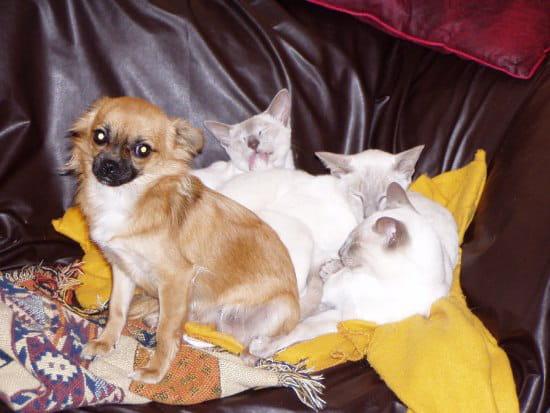 Mes chats ont saccag la tapisserie avec leurs griffes que mettre sur les murs r solu page 2 - Mes chats ont des puces ...