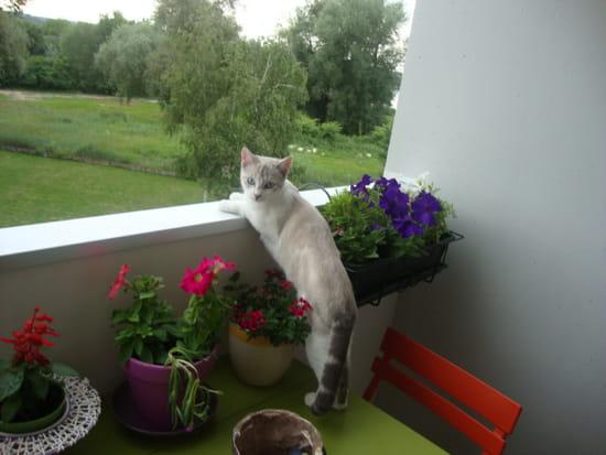 Que faire pour que mon chat arr te de mordre r solu - Comment empecher un chat de faire pipi partout ...