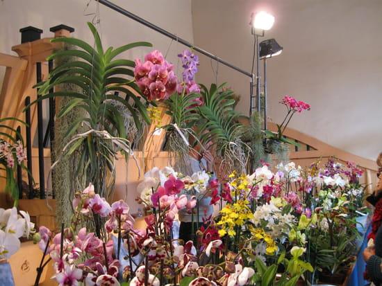 O acheter de belles orchid es en r gion parisienne fleurs for Ou acheter des fleurs