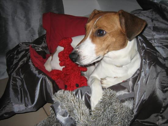comment emp cher mon jack russell de marquer son territoire dans la maison chiens. Black Bedroom Furniture Sets. Home Design Ideas