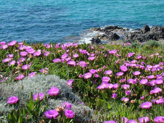 Rose des sables joyeux anniv'  58751906