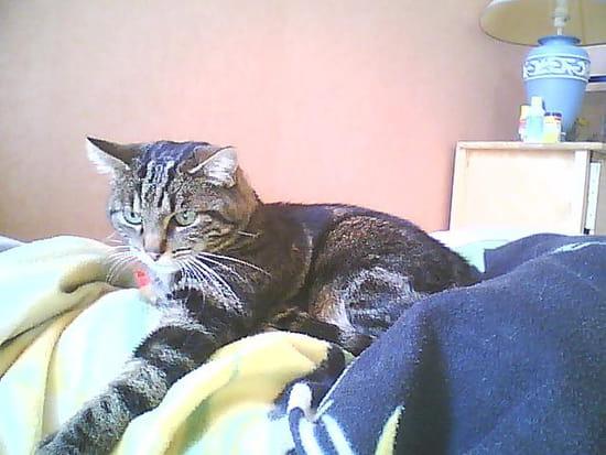 la liti re est propre mais mon chat fait ses besoins en dehors que faire chiens. Black Bedroom Furniture Sets. Home Design Ideas