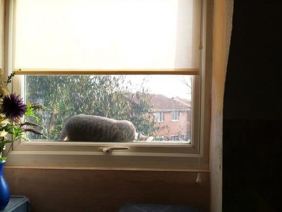 que faire pour que le chat de mon voisin ne rentre pas chez moi par les fenetres page 3. Black Bedroom Furniture Sets. Home Design Ideas