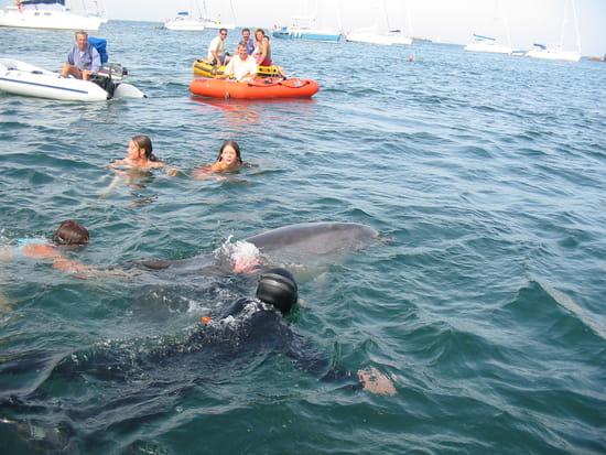 Rencontre dauphin marineland