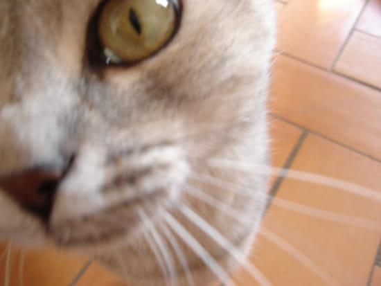 Comment faire un repulsif pour chat car ils urinent sur for Repulsif pour chat sur tissu pour interieur