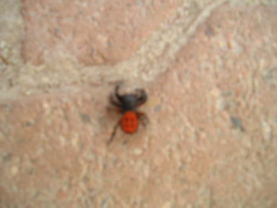 quelle est cette araign e r solu animaux. Black Bedroom Furniture Sets. Home Design Ideas