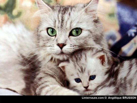 J 39 ai trouv un petit chat que puis je lui donner manger - Image de petit chat ...