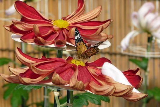 Voyage organis au japon r solu forum japon for Voyage organise jardins anglais