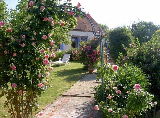 Pucerons comment en venir bout r solu fleurs - Puceron rosier savon noir ...