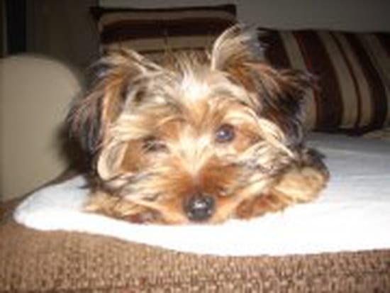mon chien de 3 ans est en chasse et il sent mauvais j ai bo le lav et le nettoy chiens. Black Bedroom Furniture Sets. Home Design Ideas