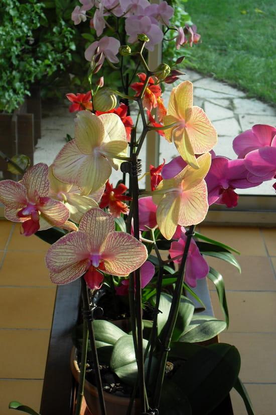 Quels sont vos conseils pour l 39 entretien des orchid es en - Arrosage orchidee en pot ...