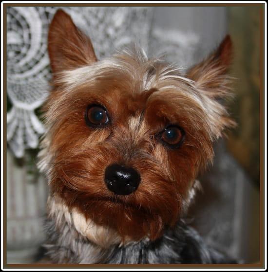 je recherche une famille d 39 accueil qui pourrait garder dartagnan pendant 15 jour chiens. Black Bedroom Furniture Sets. Home Design Ideas