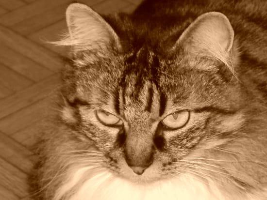 Comment d m nager sans trop derouter mon chat castr de 4 ans chats - Comment eloigner les chats de mon jardin ...