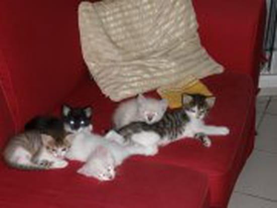 mon chat pisse sur le canapé – votre inspiration à la maison