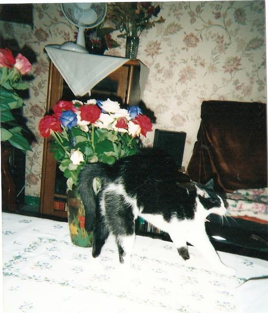 comment traiter un chaton de 4 mois qui a des puces r solu. Black Bedroom Furniture Sets. Home Design Ideas