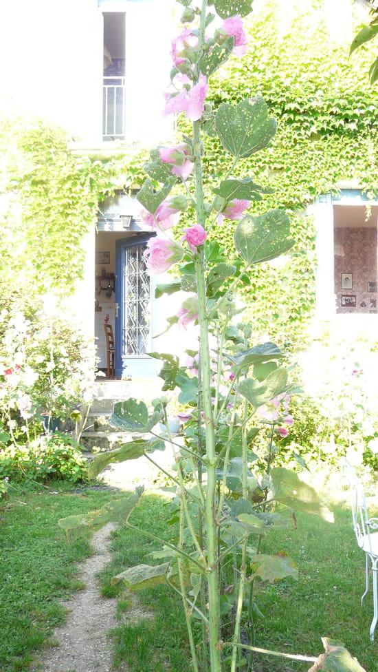 quand doit on semer les graines de roses tr mi res r colt es r solu. Black Bedroom Furniture Sets. Home Design Ideas