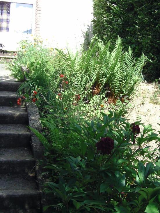 Avez vous des trucs et astuces pour nettoyer une terrasse pleine d 39 herbes d co ext rieure - Comment detruire une souche d arbre ...