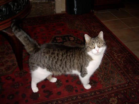 Comment rendre mon chat d 39 appartement moins agressif chats - Comment eloigner les chats de mon jardin ...