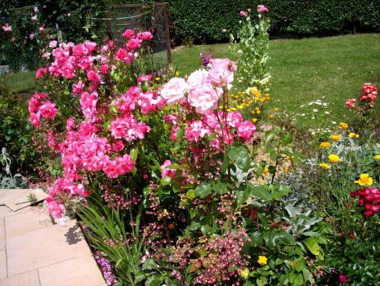 Peut on faire des boutures d 39 hibiscus - Bouture de l hibiscus de jardin ...