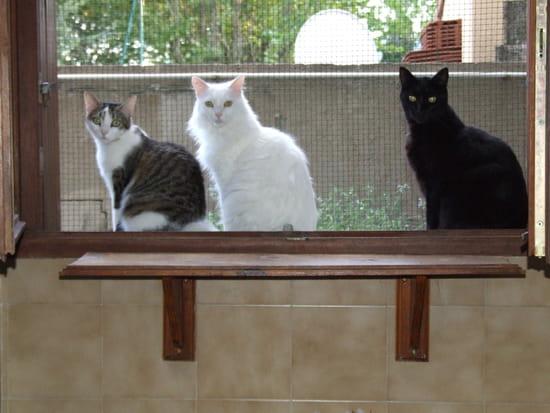 Comment faire fuir les chats de mon jardin r solu - Comment eloigner les chats de mon jardin ...