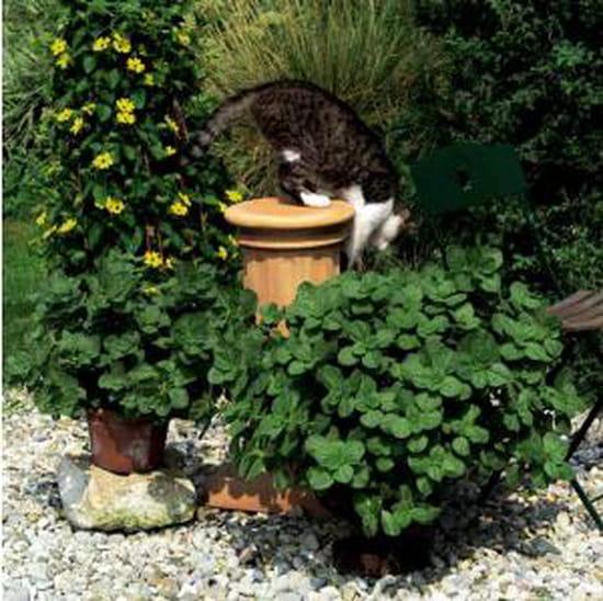 Les chats de mes voisins font leurs besoins sur ma pelouse et meme le repulsif n - Repulsif pour chats dans les jardins ...