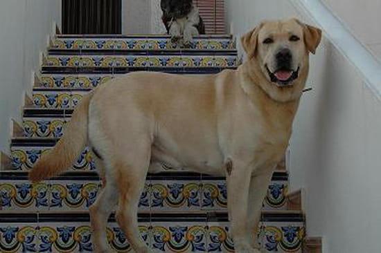 Peut on couper les ongles d 39 un chien chiens - Quand peut on couper les griffes d un chaton ...